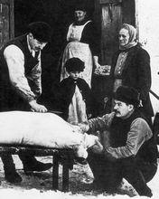 Julgrisen slaktas vid Täbylund, Åkers styckebruk 1925. Foto: Carl A Ericson. Original i Strängnäs museums arkiv.