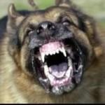 bandhund